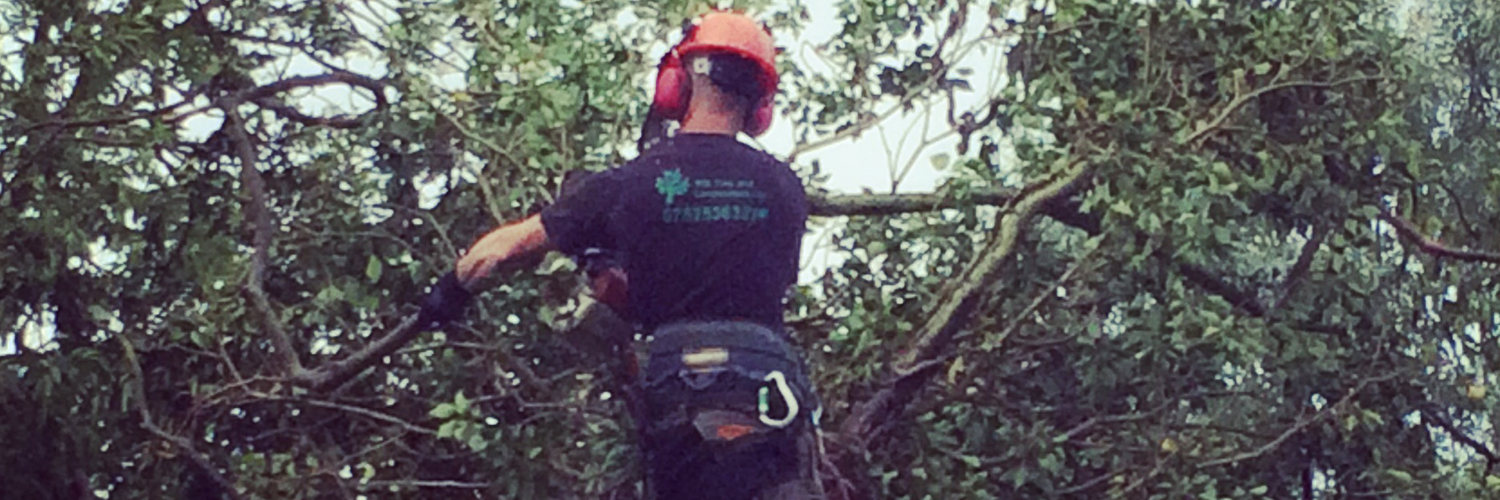 Tree Surgery, WB Tree and Landscapes Ltd, Hertford