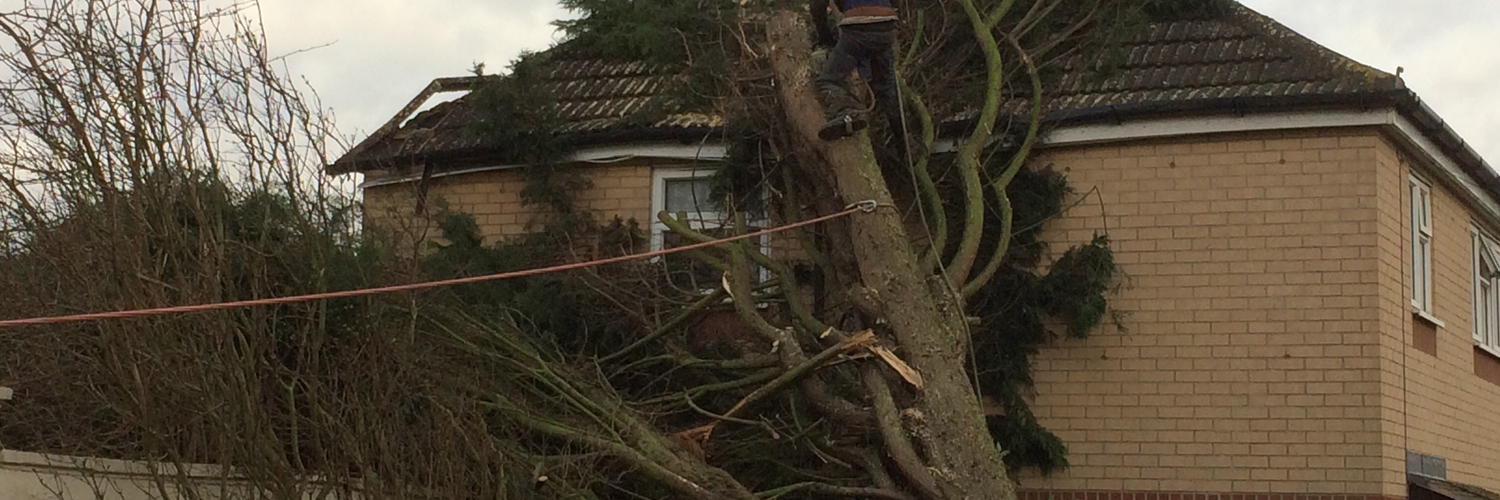 Fallen Tree, WB Tree and Landscapes Ltd, Hertford